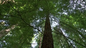 What Trees Can Do – Archangel Ancient Tree Archive