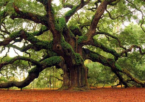 Why Ancient Trees? – Archangel Ancient Tree Archive